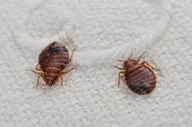 Bed Bugs prevention