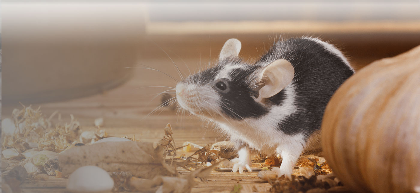rid of rodents